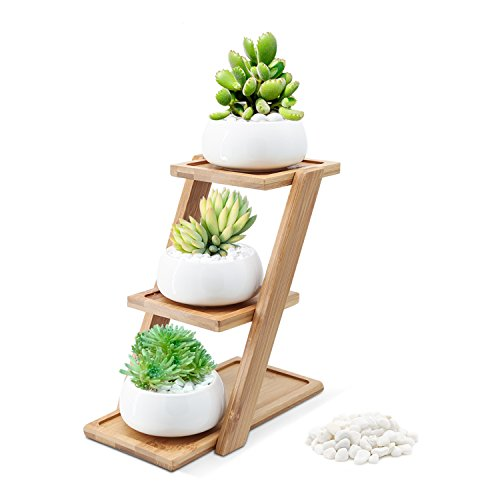 Puaida 3.15 Inch Small Modern Round White Ceramic Succulent Plant Pot, Planter for Succulent Plants, Small Cactus and Herbs with Bamboo Stand and Stone for Room Decor- Set of 3 by Puaida