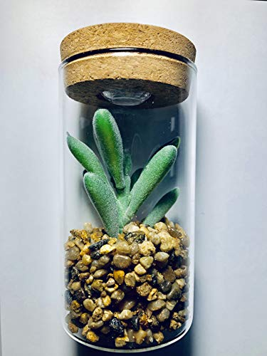 Artificial Succulent Plants - Faux Plastic Plant in Glass Terrarium with Potted Decor and LED Light - Fake Succulents in Pot - Decoration for Desk, Office Room, Kitchen and Bathroom (Tall Green) ()