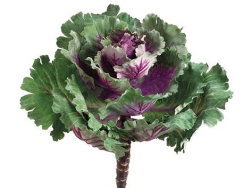 Ornamental Silk - 11.5 Ornamental Cabbage Purple Green-1 Each