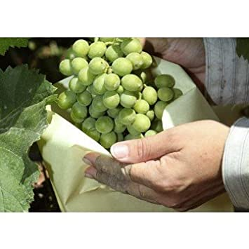 Tecnologías Agrarias 100 Bolsas Protectoras para Uvas (40 cm x 26 cm)