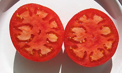 manalucie tomato - 3