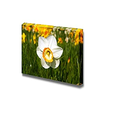 Close Up Picture of Beautiful White Daffodil Narcis Narcissus Flower - Canvas Art Wall Art - 12