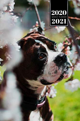 Boxer Dog Calendar Week Planner 2020 / 2021 - Cherry Flowers: Pup Puppy Doggie Pet Owner Weekly Bullet Journal Notebook Diary in 6