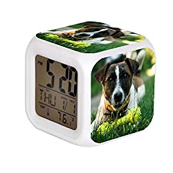 JHSIT 7 Color Change LED Digital Alarm Clock with Date Alarm Thermometer Desktop Table Cube Alarm Clock Child Home Brown and White Short Coated Dog on Green Green Grass