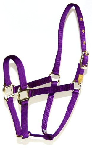 Hamilton 8D AVPU 3/4-Inch Nylon Arabian Horse Halter for 800 to 1100-Pound Horse, Purple ()