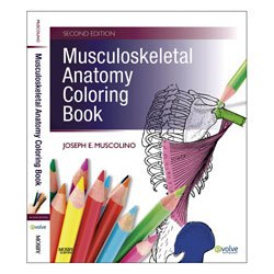 Amazon.com : Musculoskeletal Anatomy Coloring Book : Everything Else