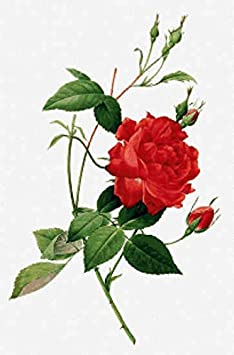 Regular Size Symbols Scarlet Quince RED007 Rosa eglanteria by Pierre-Joseph Redoute Counted Cross Stitch Chart