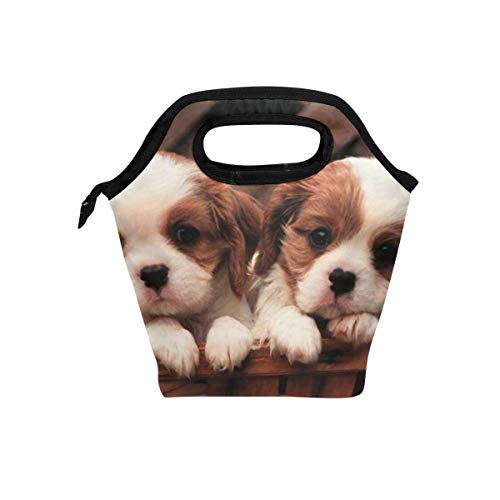 (Lunch Box Cavalier King Charles Spaniel Puppies Womens Insulated Lunch Bag Kids Zipper Lunch Tote)