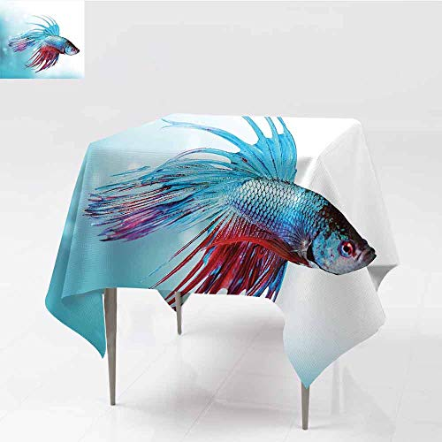 - Jbgzzm Aquarium Square Tablecloth Siamese Fighting Betta Fish Swimming in Aquarium Aggressive Sea Animal Party W70 xL70 Sky Blue Dark Coral