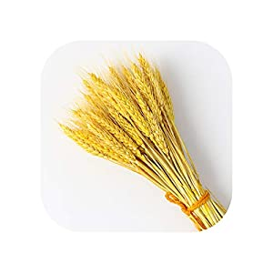 Sweet*love New 50Pcs Decorative Dried Artificial Flower Grain Bouquet of White Dried Wheat Decor Natural Plant Wedding Decoration Dry Party,Gold,50Pcs 19