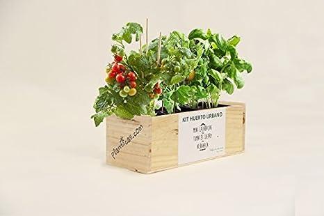 Kit de Huerto Urbano: Minicalabazas, Tomates Cherry y Albahaca ...