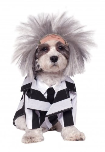 [Rubies Costume Company Beetlejuice Pet Costume, Large] (Beetle Juice Wig)