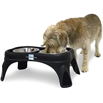 OurPets Right Height Cafe Feeder, 8-Inch