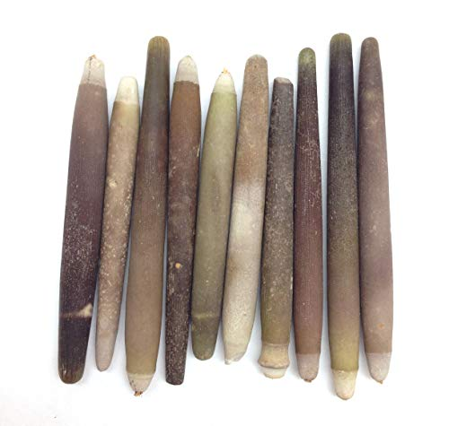 PEPPERLONELY 10PC Large Sea Urchin Spines, 2-1/2 Inch ~ 3 Inch