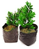 Ez4garden Nursery Pots Plant-Fiber Seedling-Raising Bags Garden Supplies Plastic Nursery Bag,W7.9 xL11.8 Black (100pcs)