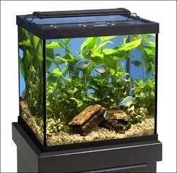 Marineland (Aquaria) AMLNV18080 Glass Cube and Column Aquarium Tank, 27-Gallon, Black by Marineland (Aquaria)