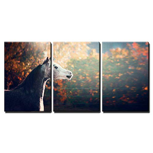 - wall26 - 3 Piece Canvas Wall Art - Beautiful Arabian Horse with Whitehead on Wonderful Nature Background - Modern Home Decor Stretched and Framed Ready to Hang - 24