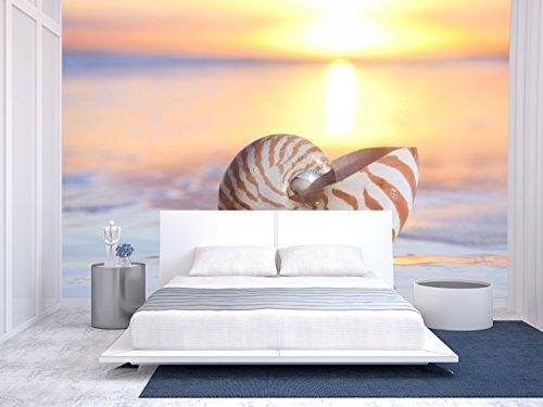 Nautilus Shell in the Sea Sunrise Shallow Dof