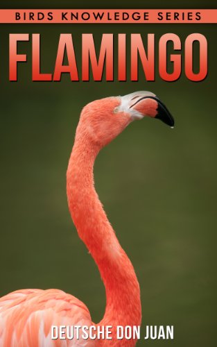 Flamingo: Beautiful Pictures & Interesting Facts Children Book About Flamingos (Birds Knowledge Series)