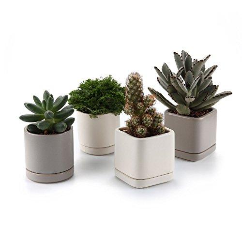 3 inch ceramic pot - 4