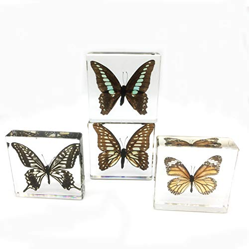Amazingbug 4 PCS Real Butterfly Specimen Specimens Paperweight Paperweights Collection Display (3x3x0.6 Inch)