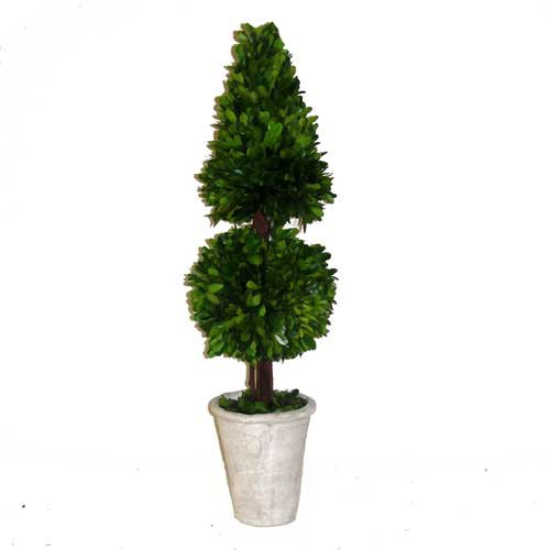 Preserved Boxwood Cone Topiary Mixed 24'' by Flora Decor