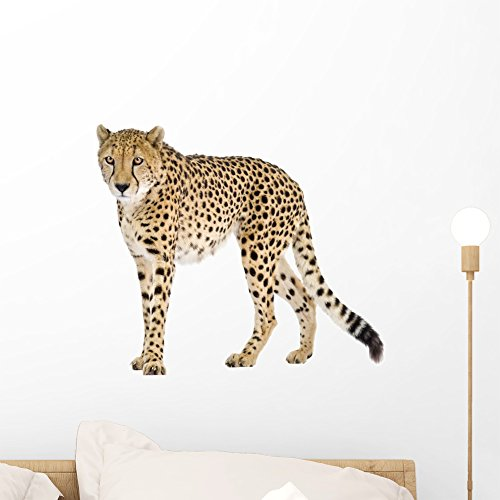 cheetah wall decals - 6