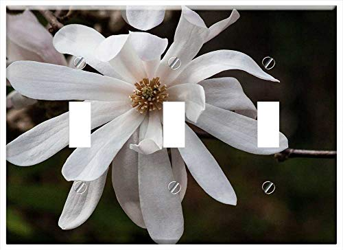 Switch Plate Triple Toggle - Magnolia Blossom Bloom Bush Spring Bloom Plant 4