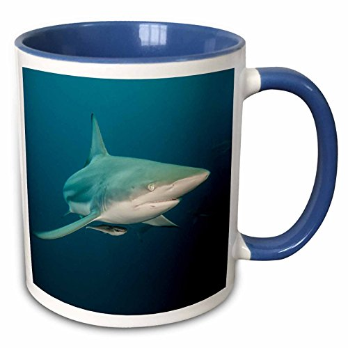3dRose Danita Delimont - Sharks - Oceanic Black-tip shark, Umkomaas, KwaZulu-Natal, South Africa - 15oz Two-Tone Blue Mug (mug_225118_11)