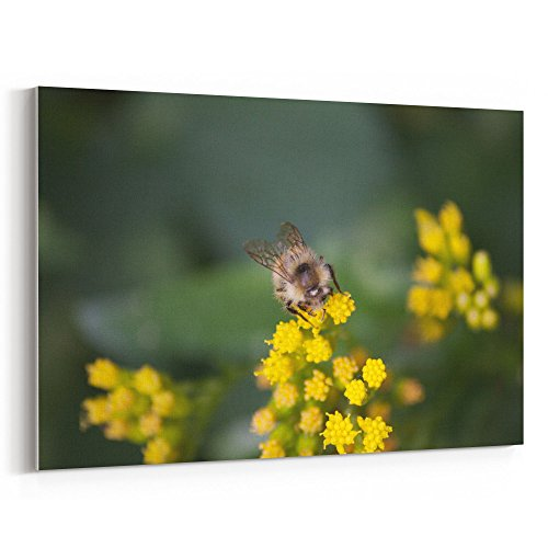 Westlake Art - Outdoor Grow - 16x24 Canvas Print Wall Art - Canvas Stretched Gallery Wrap Modern Picture Photography Artwork - Ready to Hang 16x24 Inch (Grow Bucket Sunflower)