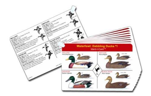 9 Card Set - 4