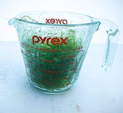 AQUACULTURE NURSERY FARMS Chaetomorpha Macro Algae 1 Cup. Copepod Amphipod Habitat. Saltwater - Refugium Macro Algae