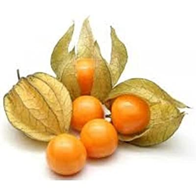 "Physalis Peruvian - Cape Gooseberry - Edibles - 2 Plants 3"" Pot"