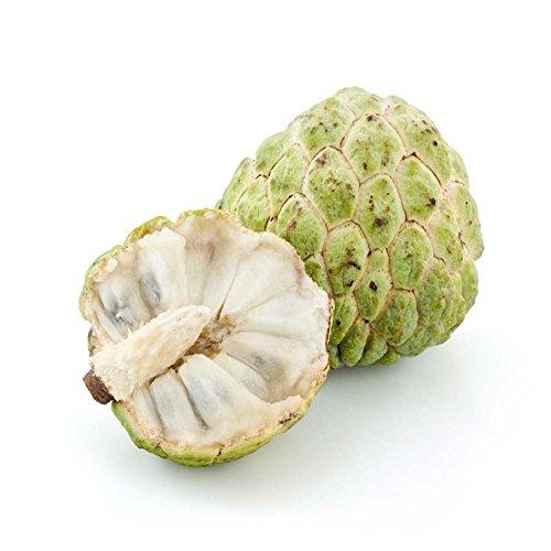 Annona Squamosa Sugar - Sugar Apple 10 Seeds, Custard Apple, Annona squamosa, Delicious Sweet Fruits