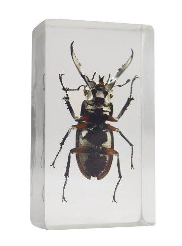 resin beetle - 2