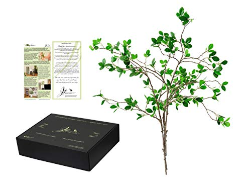 Ficus Artificial Branches leaf spray (3) premium design silky plant greenery spray 31 inches elegant box. Plus Inspiration and Ideas leaflet to style and decorate home, office, banquet or wedding