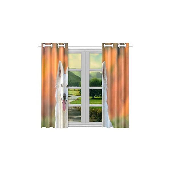 AIKENING White Swiss Shepherd Dog Autumn Kitchen Curtains Window Curtain Tiers for Café, Bath, Laundry, Living Room Bedroom 26 X 39 Inch 2 Pieces 4