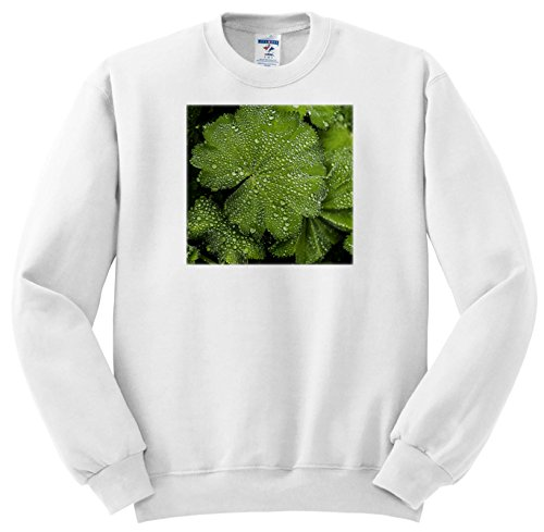 Price comparison product image 3dRose Andrea Haase Nature Photography - Green Leaf With Drops Of Water Close up - Sweatshirts - Youth Sweatshirt Large(14-16) (SS_264673_12)