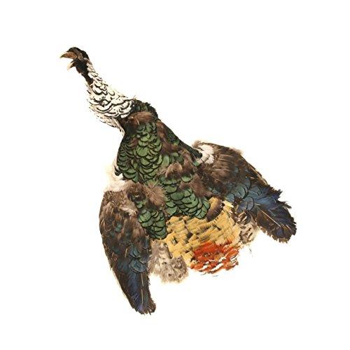Zucker Feather (TM) - Lady Amherst Pheasant Pelt #2 - Natural-WC (Pheasant Skin)