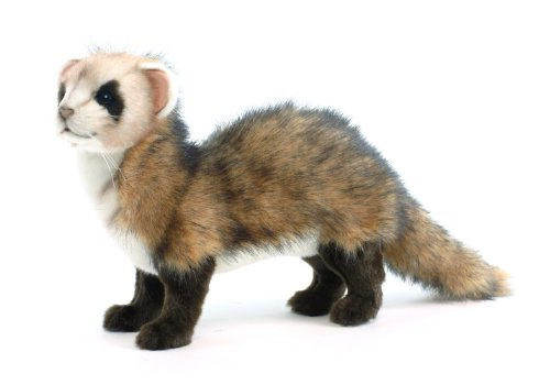 Black-footed ferret No.4346 (japan import) (Plush Ferret)