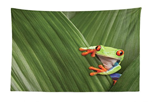 - Lunarable Animal Tapestry, Red Eyed Tree Frog Hiding in Exotic Macro Leaf in Costa Rica Rainforest Tropical Nature, Fabric Wall Hanging Decor for Bedroom Living Room Dorm, 45 W X 30 L inches, Green