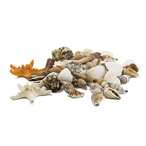 CYS EXCEL Sea Shells Mixed Colorful Beach Seashells, Natural Colored Starfish Accents for Nautical Decor,Home Decor, Beach Theme Party Wedding Decoration, Gifts and Vase Fillers (50 - 60 Seashells) (Mini Beach Natural Shells)