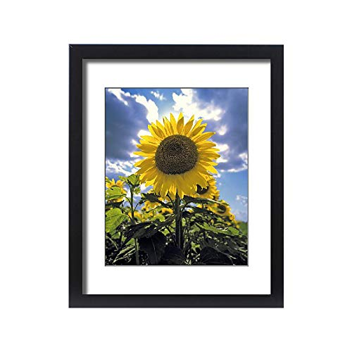- Media Storehouse Framed 20x16 Print of USA, North Dakota, Cass Co (11180468)