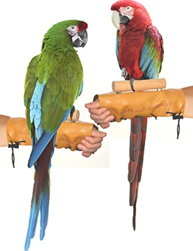 (Avianweb Arm & Hand Perch (X-Large (1.5