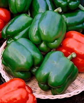 VISA STORE Green Pepper Seeds, Sweet Pepper Seeds, Yolo Wonder, Peppers, 50ct