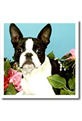 Dogs Boston Terrier - Emma Boston Terrier - 10x10 Iron on Heat Transfer for White Material (ht_893_3)