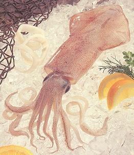 Calamari Rings 2 Lbs.