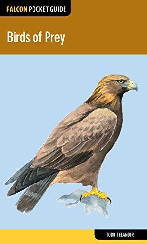 Birds of Prey (Falcon Pocket Guides)