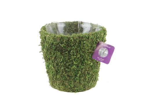 Super Moss (55122) Salinas, Fresh Green, Medium