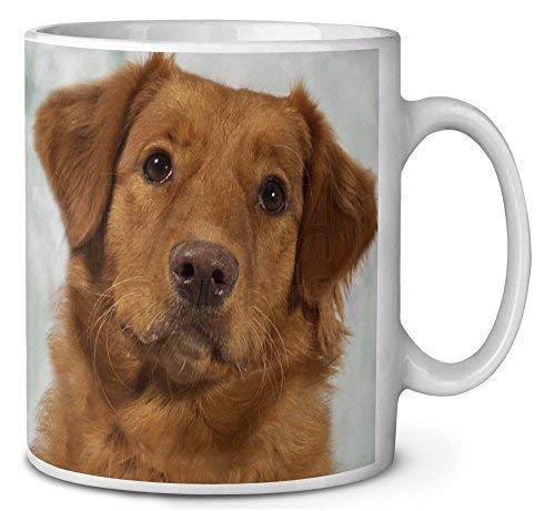 Voicpobo Nova Scotia Duck Tolling Retriever Dog Novelty Ceremic Coffee Mugs 11 Oz Christmas Birthday Mug Gifts for Mom,for Dad,for Girls,for ()